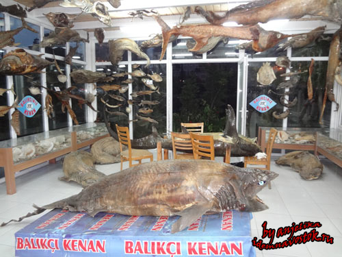 """Ресторан Балыкчи Кенан и музей """"Живые существа турецких морей"""""""